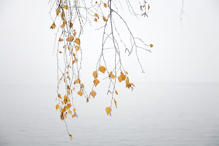LakeTrees24WEB.jpg